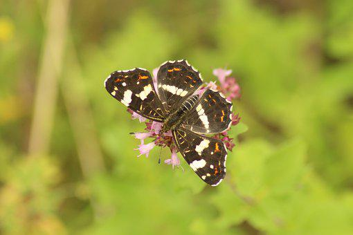 Nature, Insect, Animal, Animal World, Butterfly, Summer