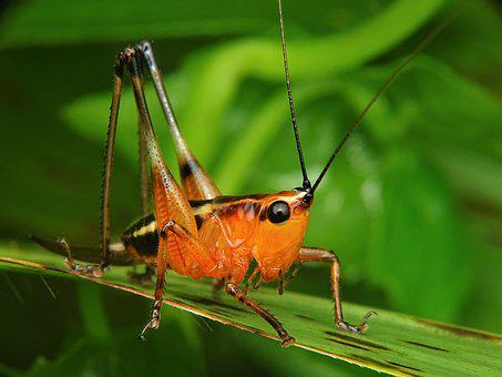 Grasshopper, Katydid, Locust, Praying, Mantis, Insect
