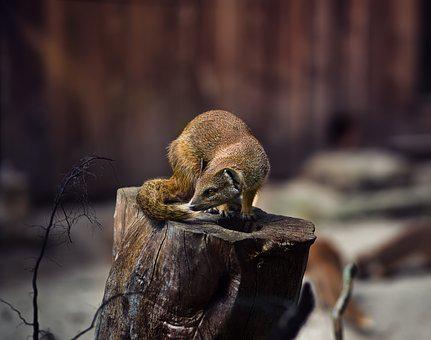 Marten, Mammal, Animal World, Animal, Nature, Wood