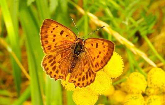 Nature, Butterfly Day, Insect, Plant, At The Court Of
