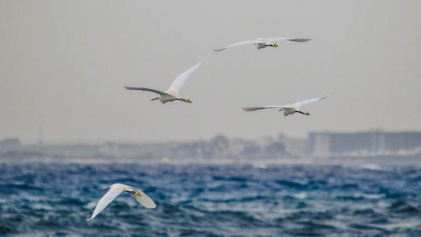 Fly, Sea, Flight, Nature, Birds, Flock, Animal