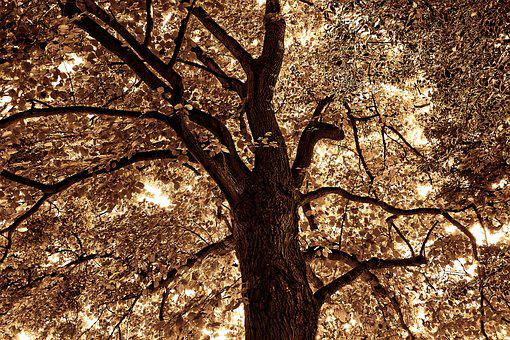 Tree Top, Branch, Foliage, Trunk, Canopy, Silhouette
