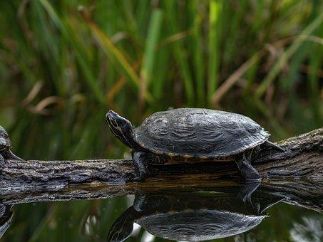 Nature, Animal World, Animal, Reptile, Slowly