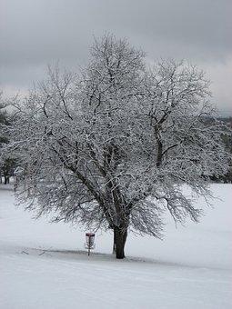 Winter, Tree, Camp