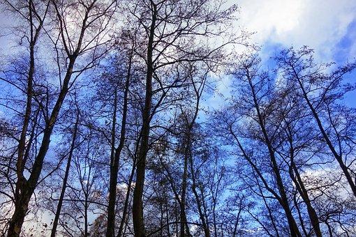 Trees, Tree Tops, Rising High, Bare Trees, Winter Trees