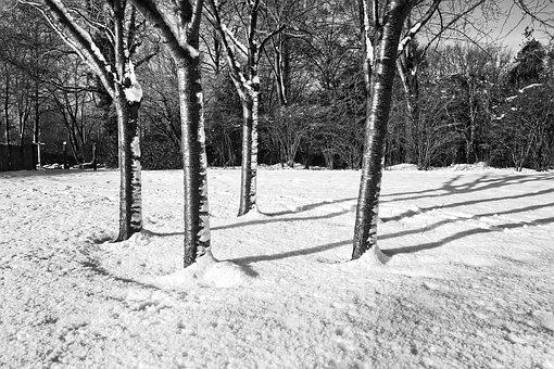 Trees, Bare Trees, Winter, Snow, Circle Of Trees