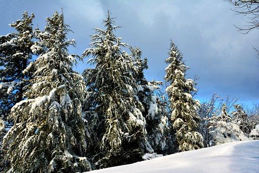Tree, Current Season, Nature, Blue Sky, Snow, Winter