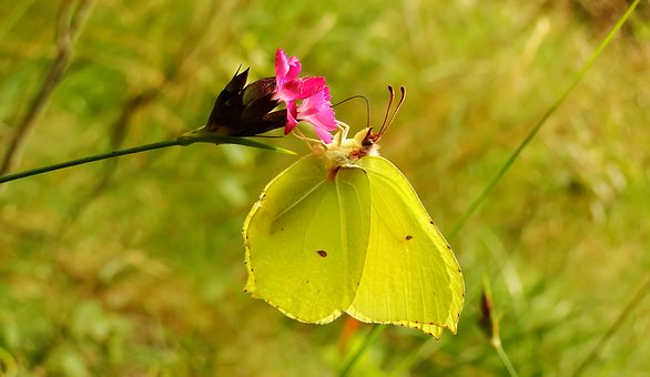 Nature, Flower, At The Court Of, Plant, Leaf, Insect