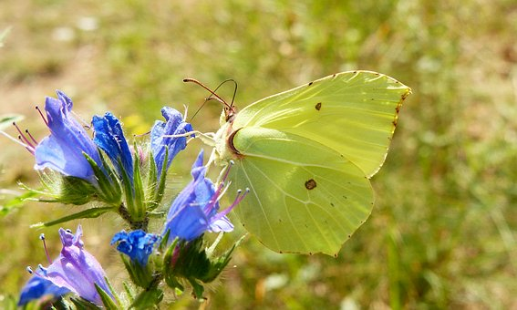 Nature, Flower, Butterfly Day, Plant, Insect, Butterfly