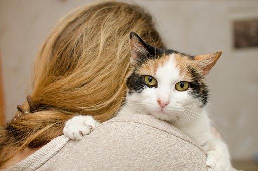 Cat, Kitten, Domestic Cat, Animal, Cat's Eyes