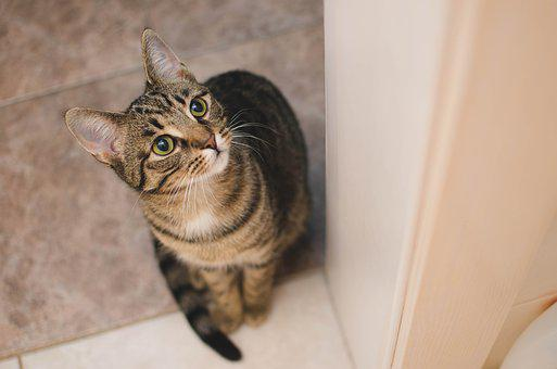 Cat, Kitten, Bury Cat, Domestic Cat, Animal