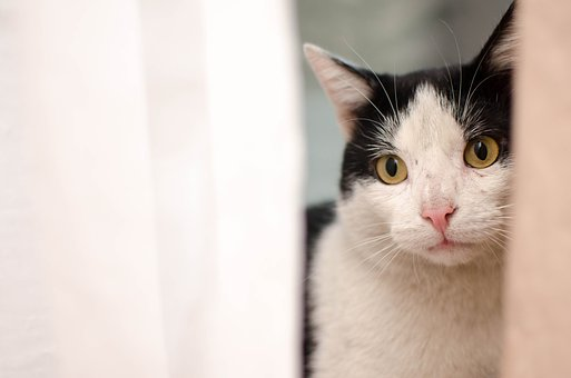 Cat, Kitten, Domestic Cat, Animal, Tomcat, Sitting Cat