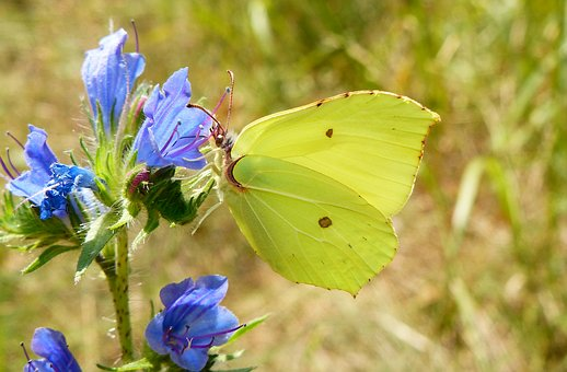 Nature, Butterfly Day, Insect, Flower, At The Court Of