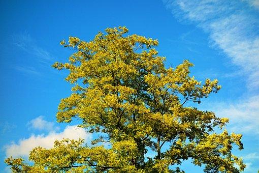 Tree, Tree Top, Foliage, Green Leaves, Deciduous Tree