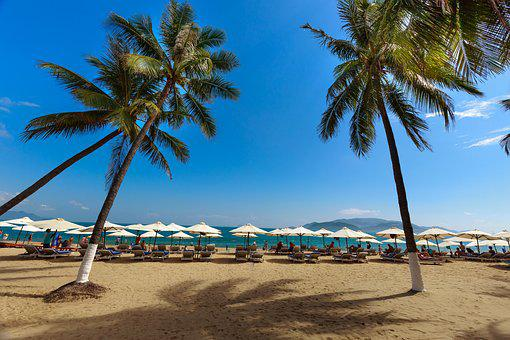 Nha Trang, Vietnam, Beach, Melons, Green Tree, Tropical