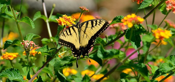 Butterfly, Nature, Insect, Flower, Outdoors