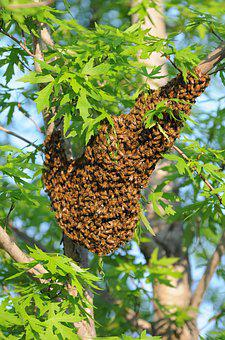 Tree, Flora, Leaf, Food, Nature, Bees, Beehive