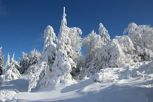 Winter, Snow, Winter Forest, Wintry, Cold, White, Light