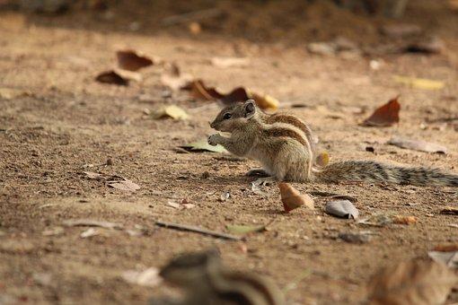 Squirrel, Nature, Wildlife, Animal, Little, Wild