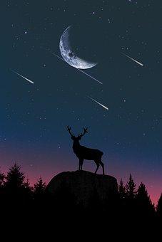 Moon, Sky, Nature, Dusk, Sun, Silhouette, Dawn, Deer