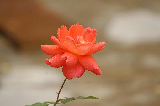 Nature, Flower, Leaf, Flora, Outdoors, Summer