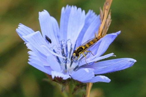 Nature, Flower, Plant, Leaf, Summer, Macro, Hoverfly