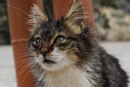Cute, Animal, Cat, Stray, Mammal, Looking, Portrait