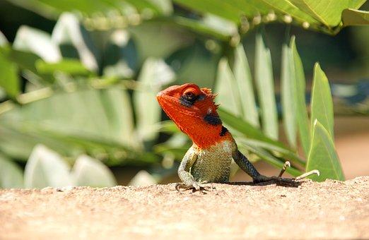 Nature, Animals, Birds, No One, The Lizard, Jungle