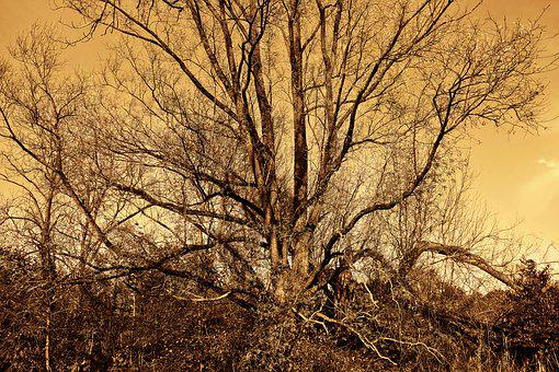 Tree, Branch, Tangle Of Branches, Bare Tree