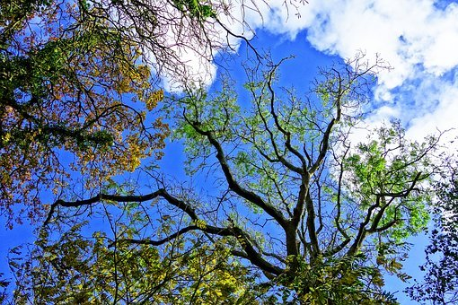 Tree, Tree Top, Branch, Bare Branch, Tangle, Foliage