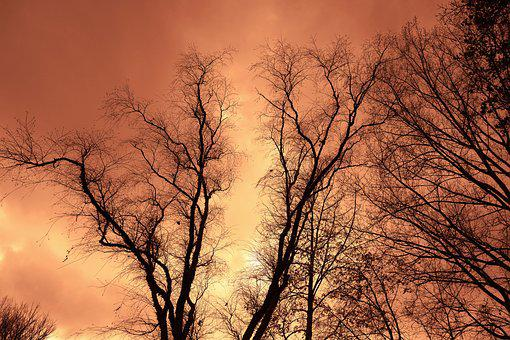 Trees, Tree Tops, Branches, Bare Branches, Winter Trees