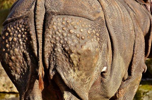 Rhino, Rump, Animal, Animal World, Pachyderm