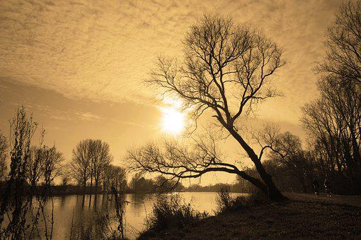 River, Banks, River View, Tree, Leaning Tree, Dusk