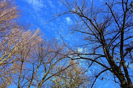 Tree, Tree Top, Branch, Bare Branch, Winter Tree