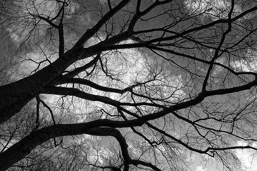 Tree, Branch, Winter Tree, Bare Branch, Stark, Leafless