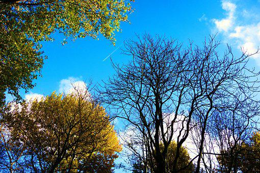 Tree Tops, Trees, Branches, Bare Branches, Autumn Trees