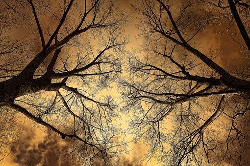 Tree, Tree Top, Branch, Bare Branch, Winter Tree, Stark