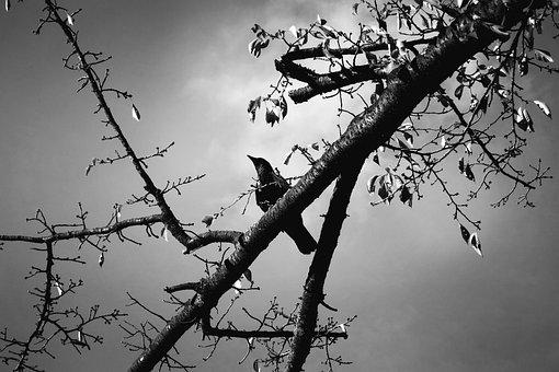 Bird, Wildlife, Animal, Branch, Sitting Bird