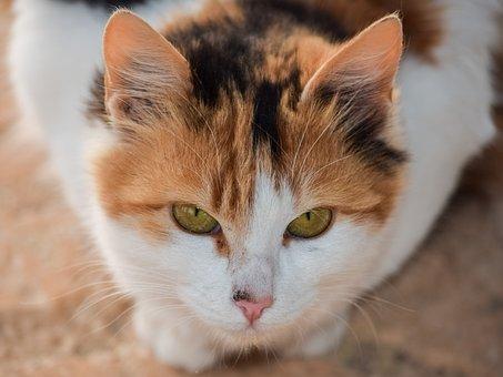 Cute, Cat, Animal, Mammal, Stray, Eyes, Staring