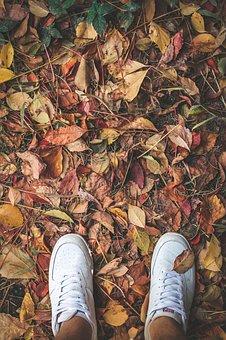 Leaves, Autumn, Tree, Nature, Current Season, Dry, Ivy