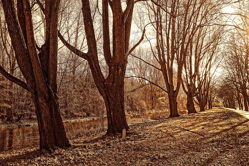 Lane, Trees, Park, Row Of Trees, Tree Lined Avenue