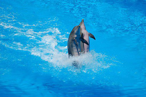 Dolphins, Swimming, Body Of Water, Immersed, Ocean, Sea