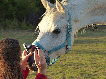 Picture, Horse, Installation, Complicity, Curious