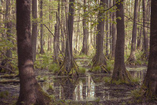 Tree, Nature, Landscape, Leaf, Park, Plant