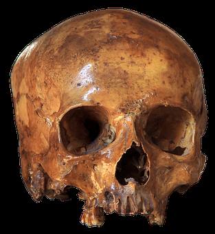 Skull, Skeleton, Bone, Anatomy, Brain Skull, Horror