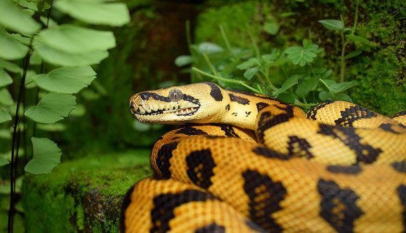 Snake, Reptile, Animal World, Animal, Nature