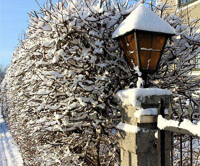 Lamp, Nature, Snow, Winter, Ass, Branches