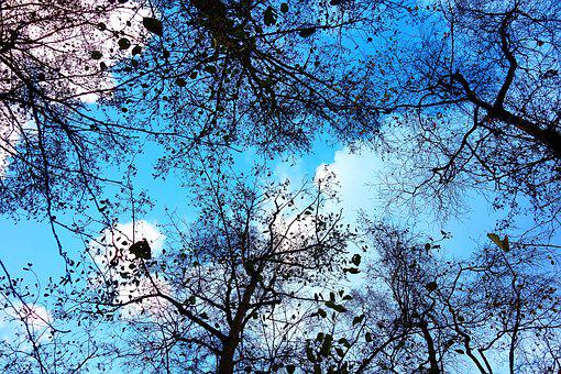 Tree, Tree Top, Branch, Bare Branch, Tangle, Bare Trees
