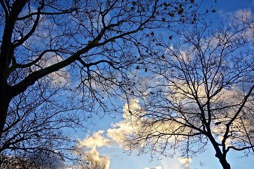 Tree, Tree Tops, Branch, Bare Tree, Winter Tree