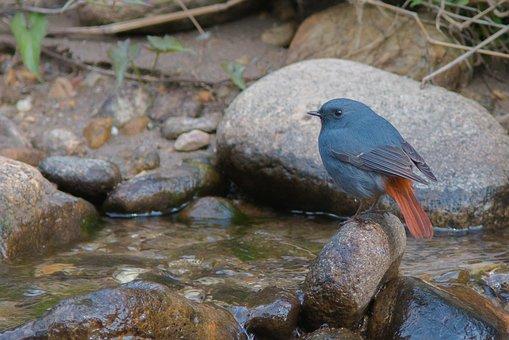 Khen Grey Red Tail, Fang, Waterfall